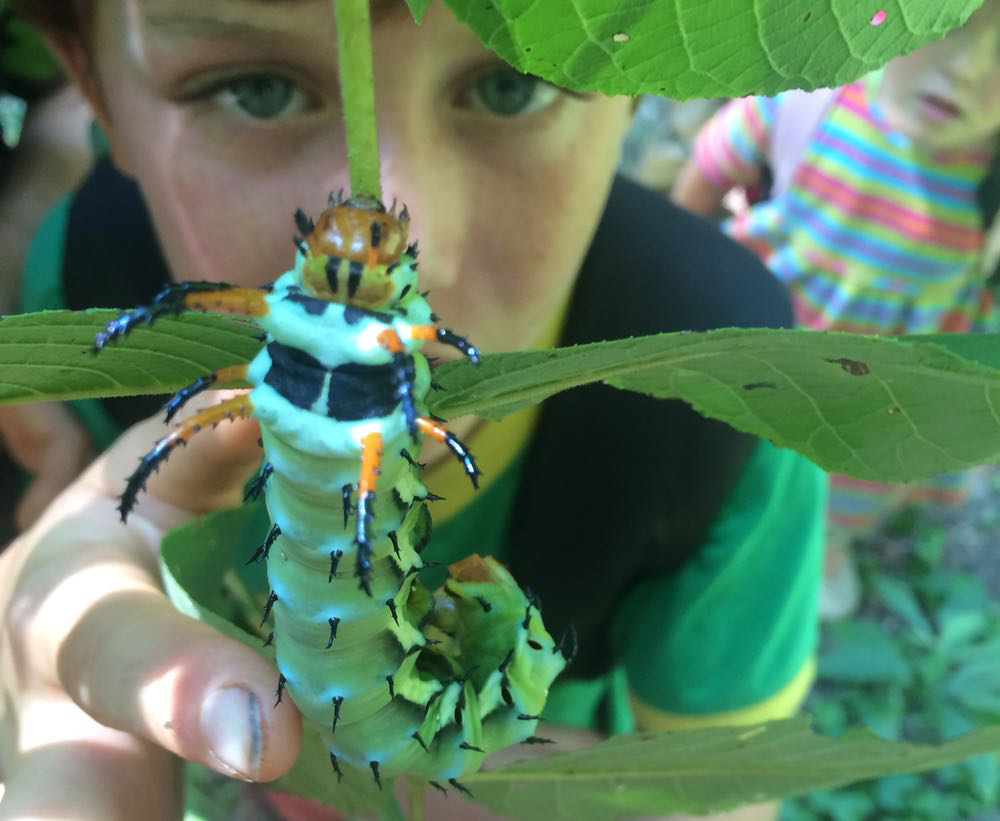 Young man looking at hickory horned devil caterpillar in foreground